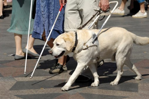 Image showing two blind individuals walking with white canes and a guide dog