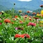 Close up image of beautiful flower patches