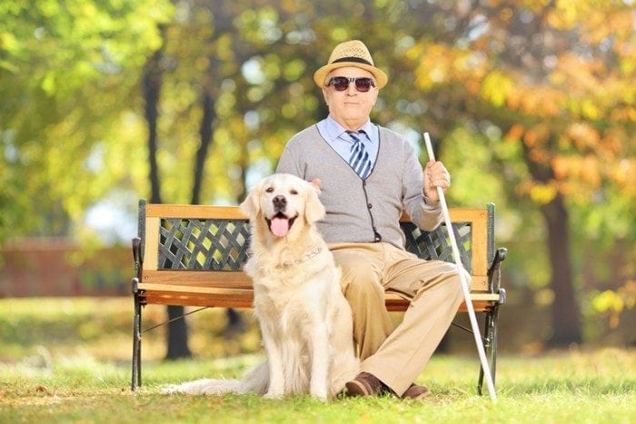 Image showing a senior gentleman who is blind sitting on a park bench with his dog sitting on the ground next to him.