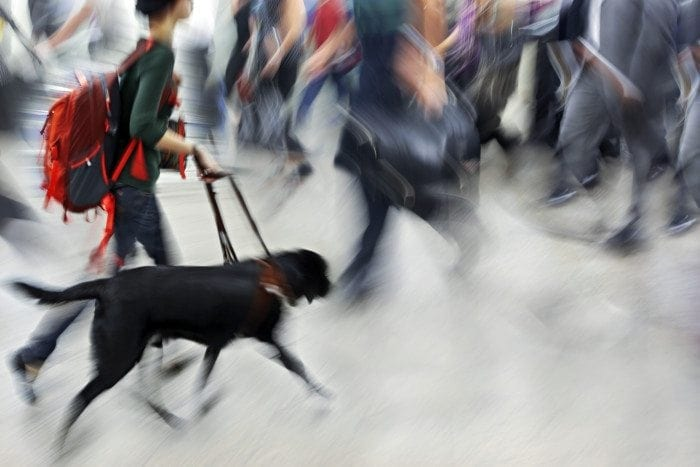 Guide dog is helping blind people in motion blur.