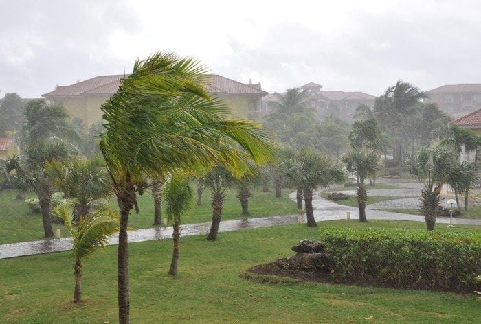 Image showing several tall palm trees blowing in the winds of a hurricane.
