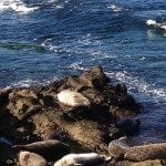 Image of several seals resting on large rocks near a seashore
