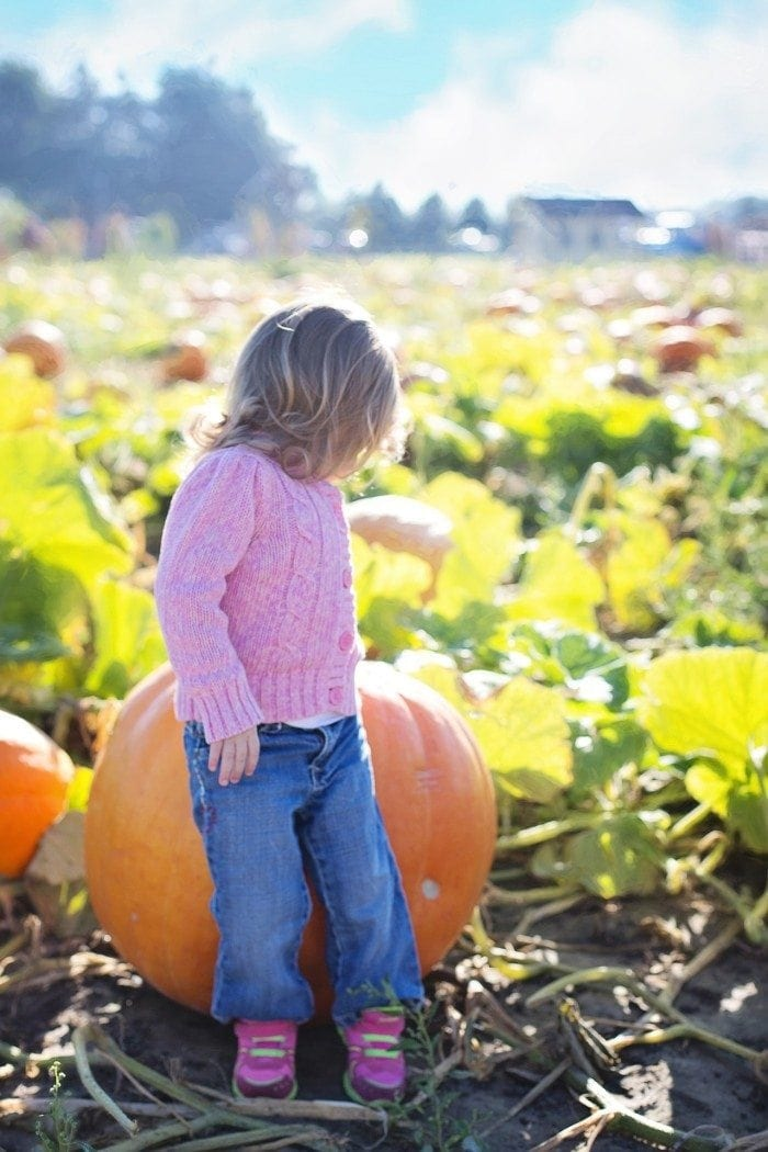 Small child with head turned back looking into a sunny pumpkin patch.