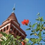 Plant with red flowers blooming and a large tower in the background.
