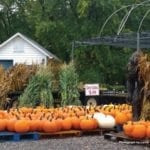 Pumpkins and corn stalks for sale at a plant nursery with a bigfoot statue to attract customers