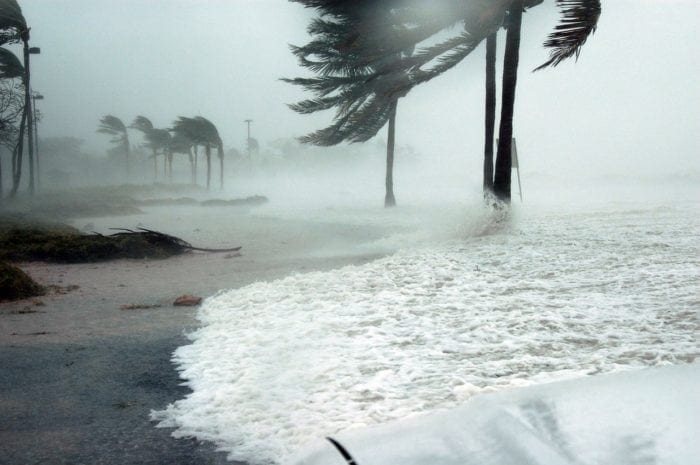 Storm surge on a FL beach as hurricane winds bend palm trees