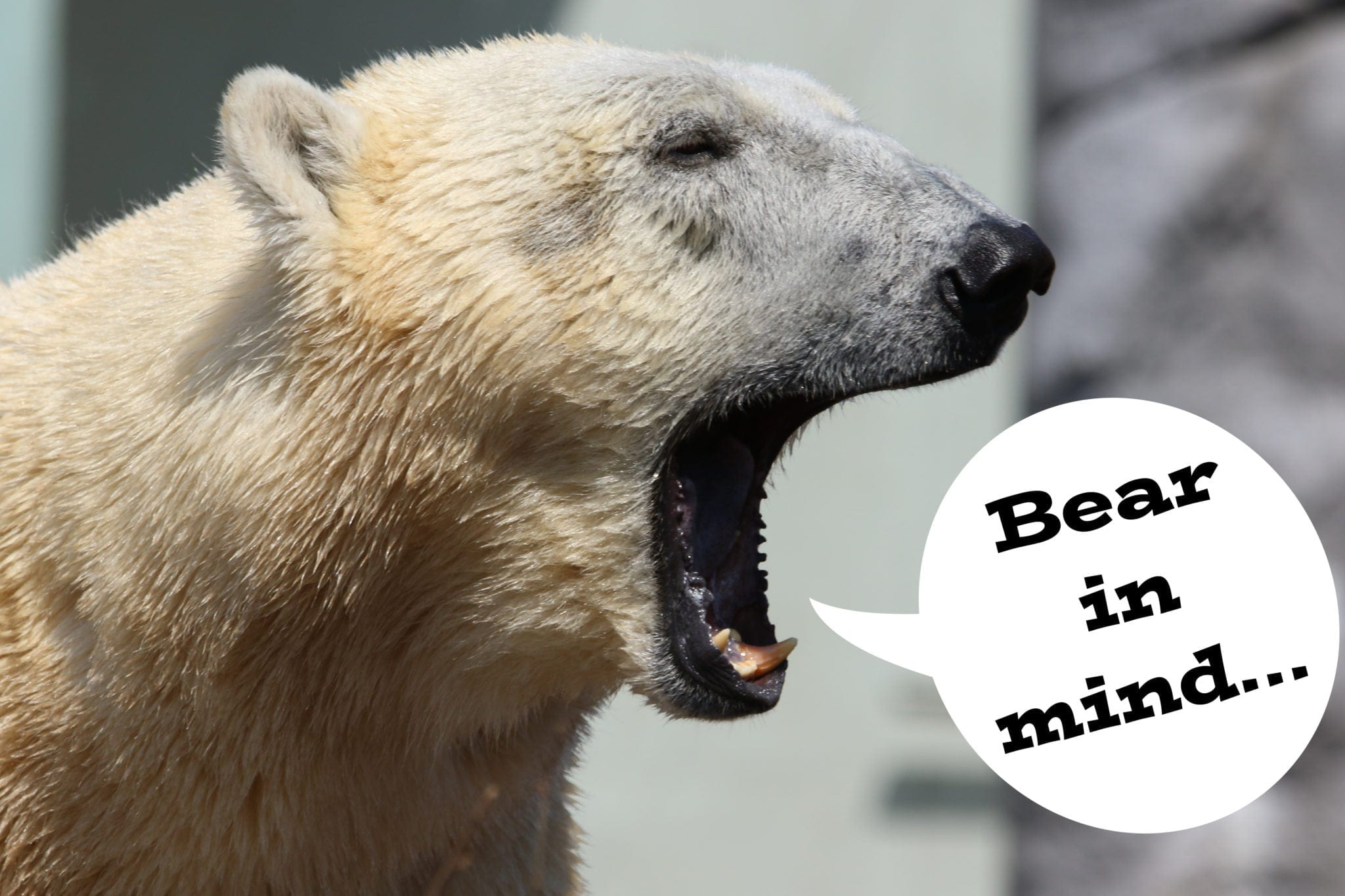 """Polar bear saying, """"Bear in mind..."""""""