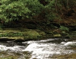 A rushing creek, rocks and green foliage in the mountains.