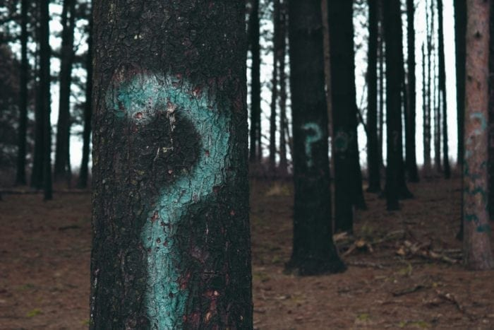 Forest with question marks on some of the trees