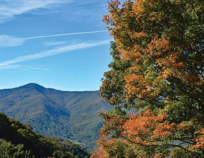 Tree with leaves changing color overlooking mountains